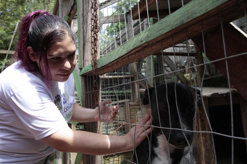 A ONG abriga mais de 350 animais abandonados