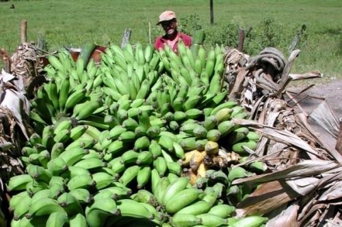 Agricultores locais conseguem atender só a 60% da demanda estadual