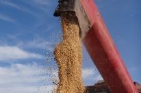 Conab mantém previsão de queda na produção de grãos e aumento da área plantada