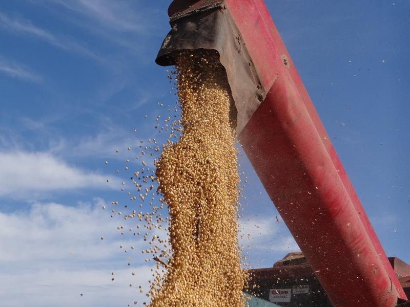 Na soja, média de produtividade está entre 65 e 75 sacas por hectare
