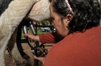 Ano deve ser de austeridade para produção de leite