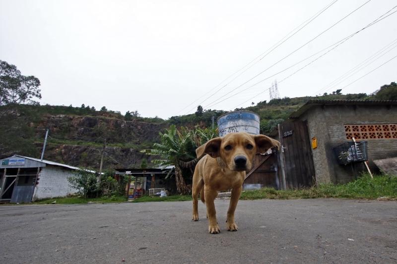 Animais com leishmaniose estão abrigados na Seda há quase um ano