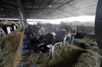 Crise do leite não afeta otimismo da Expoleite/Fenasul
