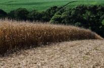 Produção de grãos na safra 2017/18 deve ser de 227,95 milhões de tonelada, diz Conab