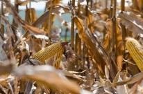 Brasil prevê safra recorde de grãos, em 242,1 milhões de toneladas