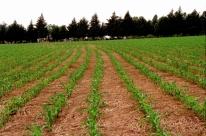 Crédito para agronegócio está mais caro, restrito e incerto