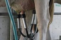 Preço do leite estável marca o início do ano