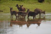 TJ revoga liminar que proibia abate de cervos no Pampas Safari