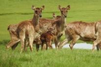 Ativistas mostram indignação com abate de cervos do Pampas Safari