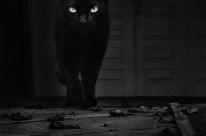 Apaixonado por gatos, Leandro Selister expõe fotografias feitas apenas com celular