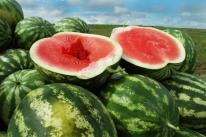 Colheita da melancia deve chegar a 250 mil toneladas no RS