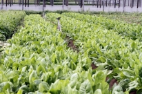 Hortas comunitárias estão presentes em 55 presídios gaúchos