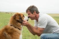 Telecine Premium exibe filme Quatro vidas de um cachorro