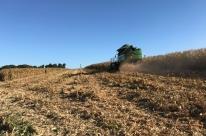 Conab aponta queda de 3,9% na safra agrícola