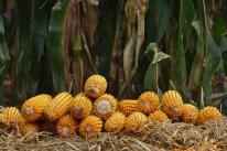 Farsul aponta alta de índice de preços recebidos pelos produtores em março