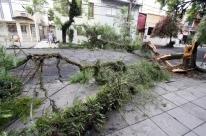 Chuva derruba árvore e bloqueia vias em Porto Alegre