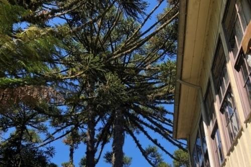 Local é alternativa para quem quer fugir do agito na Serra gaúcha
