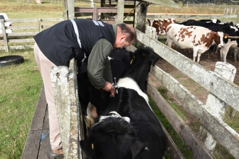 Fiscais agropecuários coletam amostras para estudo sobre a febre aftosa