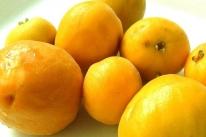 Frutas nativas tentam recuperar mercado