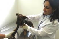 Hospital veterinário de Porto Alegre começa a funcionar