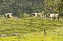Mais de 93% dos dados do Censo Agropecuário já foram coletados