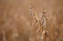 Recuo da soja impacta e safra gaúcha cai 11,4%