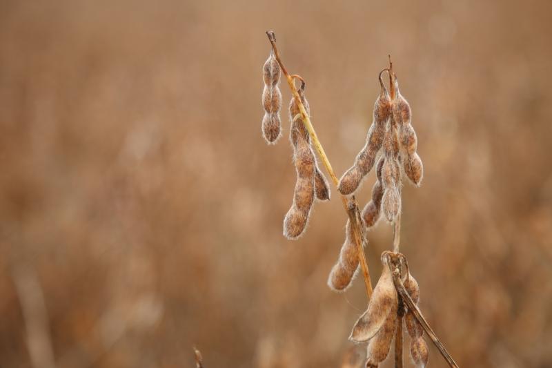 Produção cresce 12% e Governo anuncia safra recorde de soja em MS