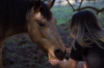 Santuário Voz Animal busca resgatar vidas