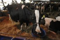 Expointer inscreve 3.975 animais para julgamentos
