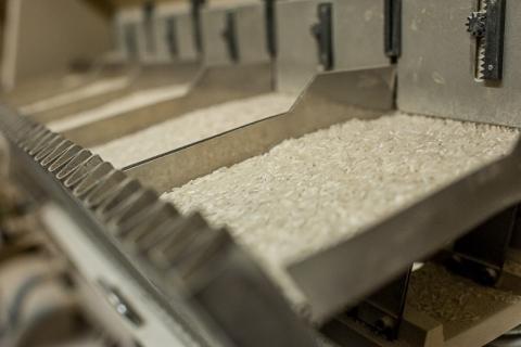 Governo confirma decisão da Camex de zerar alíquota de importação de arroz
