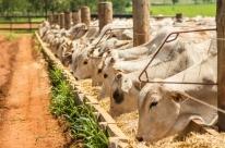 Produção de fertilizantes da Petrobras preocupa setor