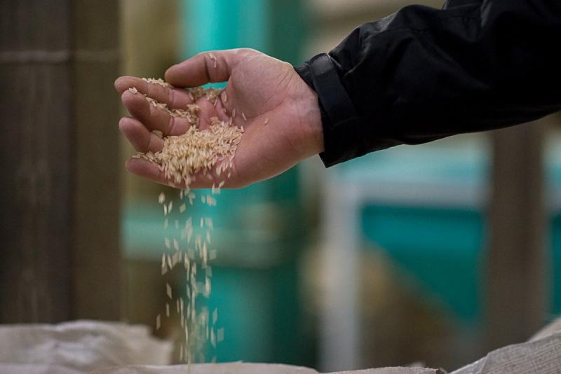 Segundo levantamento, o arroz é um dos produtos mais perdidos