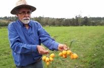 Fruticultura avança a partir da pesquisa
