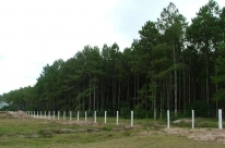 Rio Grande do Sul agrega 1,3 milhão de hectares à silvicultura