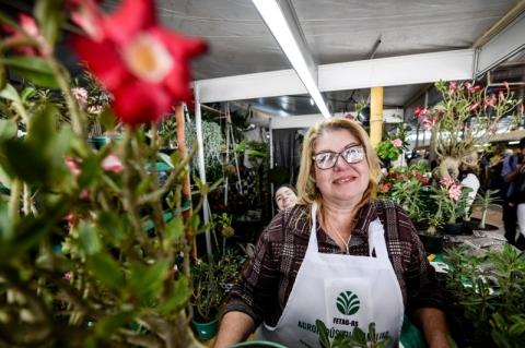 Agricultora aposta na venda de rosas-do-deserto na Expointer