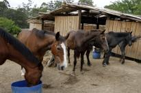 ONG atua há 10 anos resgatando animais vítimas de maus-tratos