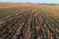 Safra de soja deve aumentar 9% no Rio Grande do Sul