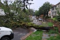 Chuva forte e ininterrupta causa acúmulo de água e queda de árvores em Porto Alegre