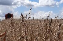 Valor de produção agrícola de 2018 bate recorde, com R$ 343,5 bilhões