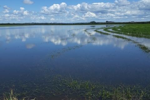 Perdas por efeitos climáticos ampliam uso do seguro agrícola