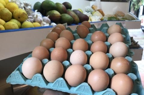 Produção de ovos é a maior em 32 anos devido à exportação de carne