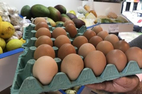 Produção de ovos de galinha cresce 6% no primeiro trimestre