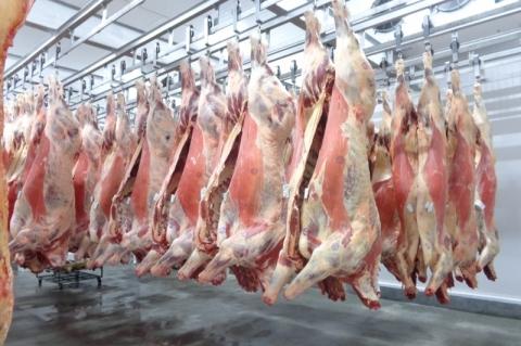 Agosto registra novo recorde mensal nas exportações de carne bovina brasileira