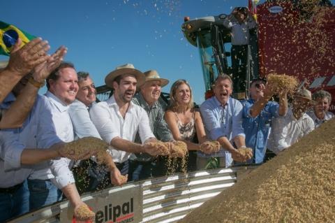 Colheita do arroz é aberta oficialmente no Estado