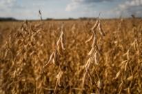 Estudo aponta queda em vários setores da produção de arroz