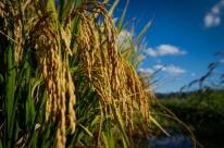 Safra nacional de grãos avança para novo recorde de 241,3 milhões de toneladas