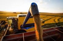 Brasil exportará arroz beneficiado ao México
