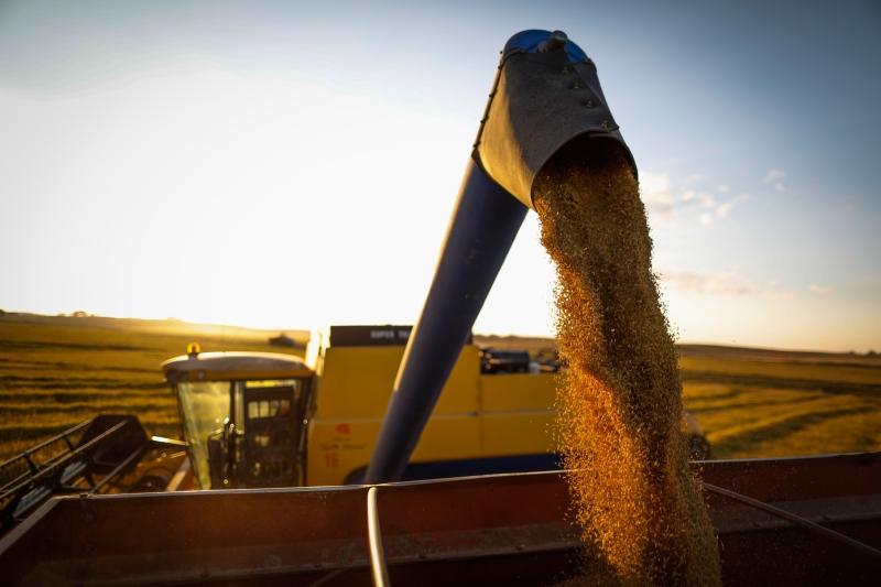 Rio Grande do Sul está colhendo sua maior safra de soja, cerca de 18,74 milhões de toneladas