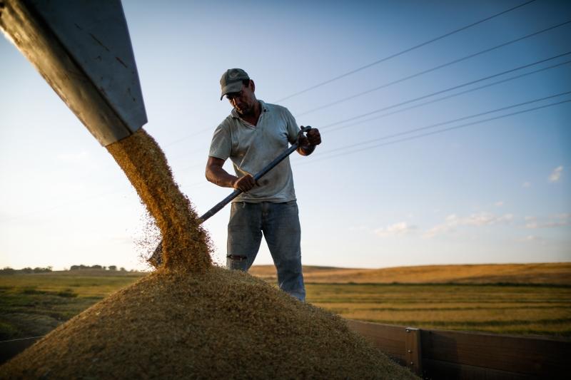 Maior expansão foi registrada no setor agrícola, que somou patrimônio líquido de R$ 5 bilhões