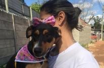 Plataforma de adoção on-line ajuda a encontrar lares para animais abandonados